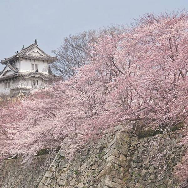 Japan Photograph - I've Been Fortunate Enough To Be In by Margaret Goodwin