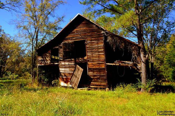 Photograph - I've Seen Better Days by Lisa Wooten