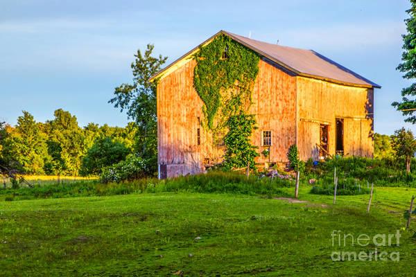 Photograph - Ivy League Barn by Rod Best