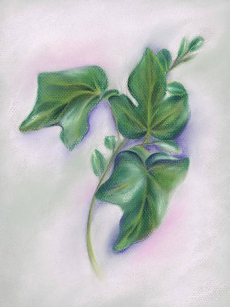 Pastel - Ivy Leaves And Boxwood Sprig by MM Anderson