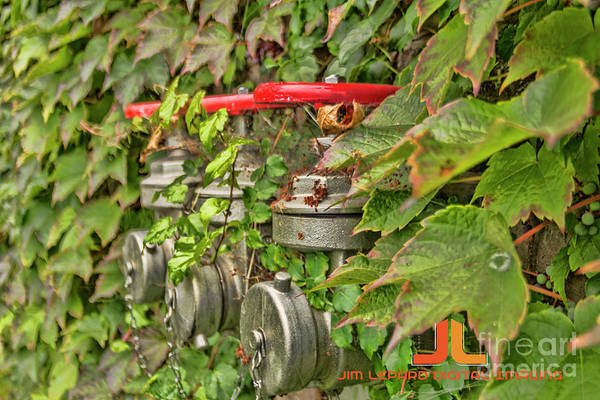 Photograph - Ivy Standpipe by Jim Lepard