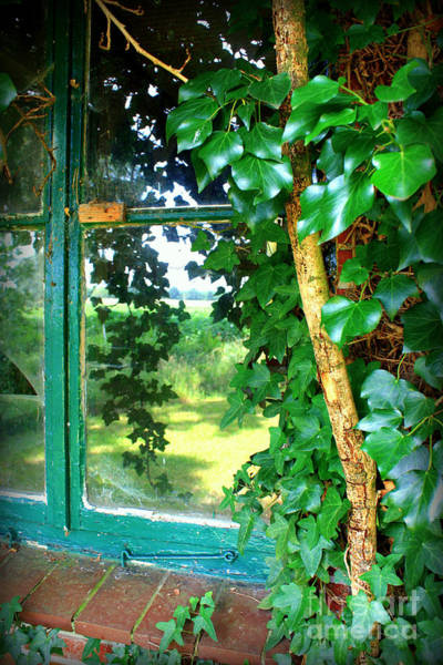 Photograph - Ivy Window Reflection by Carol Groenen