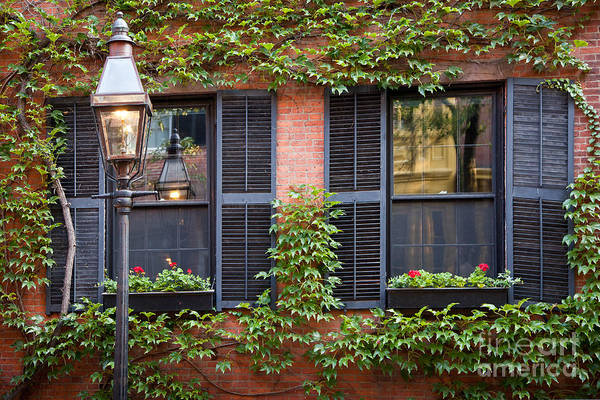 Wall Art - Photograph - Ivy Windows by Susan Cole Kelly