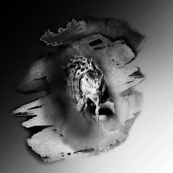 Iguana Photograph - Iwanna Iguana by Susan Capuano