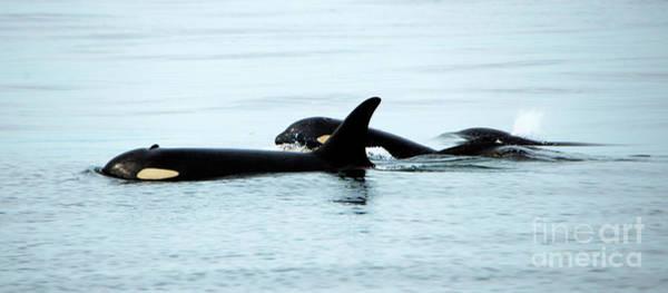 Killer Whales Wall Art - Photograph - J-pod Familyties by Mike Dawson