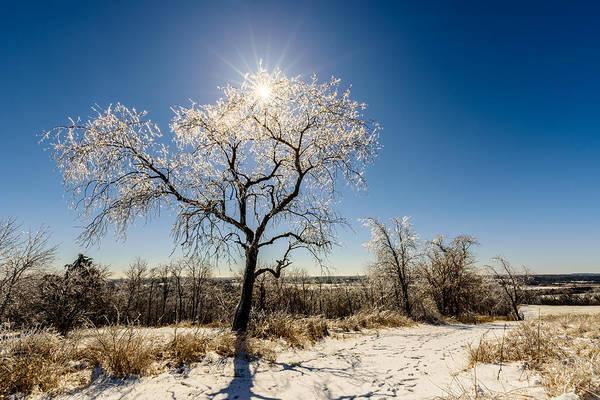 Photograph - Jack Frost's Last Stand by Randy Scherkenbach