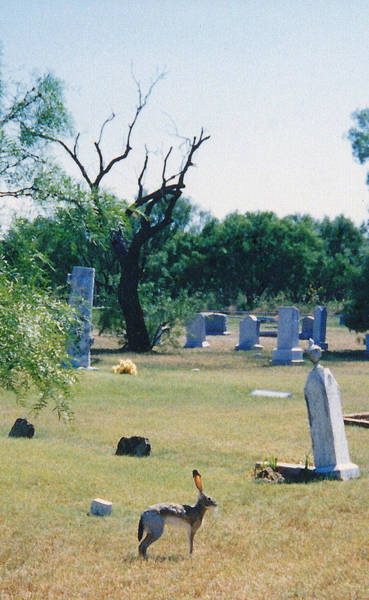 Cementery Photograph - Jack Rabbit In Cementery by Cindy New