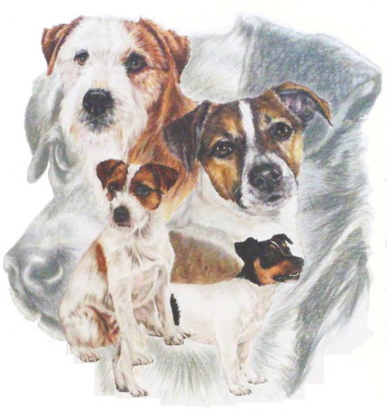 Mixed Media - Jack Russell Grouping by Barbara Keith