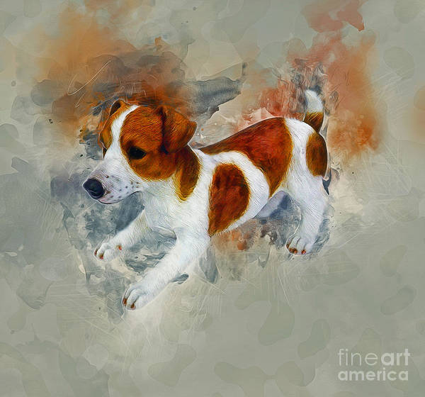 Painting - Jack Russell by Ian Mitchell