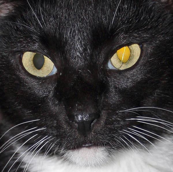 Photograph - Jack's Cat by Jennifer Robin