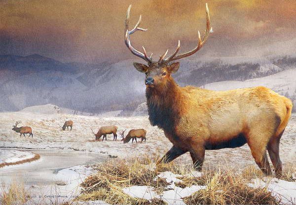 Frozen River Digital Art - Jackson Hole Refuge Bull Elk by R christopher Vest
