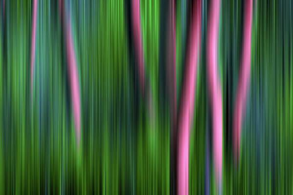 Photograph - Jade Enchantment by John De Bord