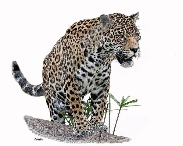 Digital Art - Jaguar 10 by Larry Linton