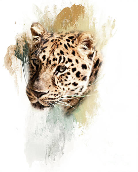 Photograph - Jaguar Abstract by Pam  Holdsworth