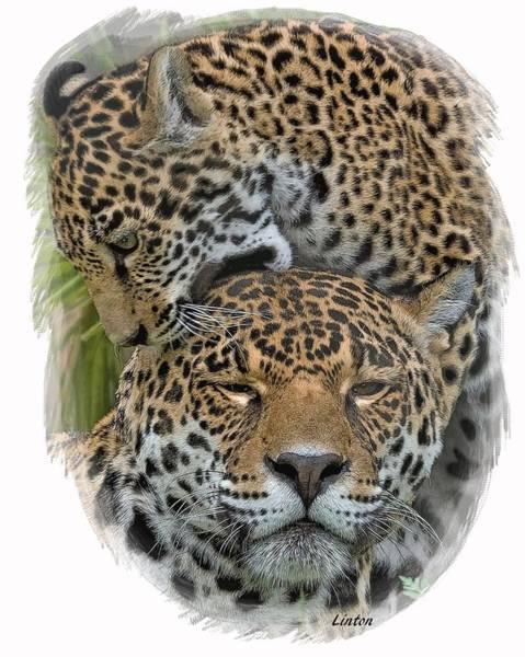 Digital Art - Jaguar Affection by Larry Linton
