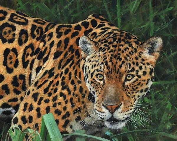Jaguar Painting - Jaguar Alert by David Stribbling