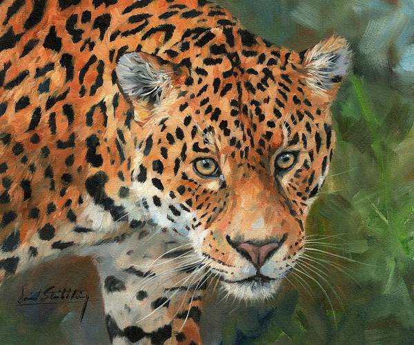 Jaguar Painting - Jaguar Big Cat by David Stribbling