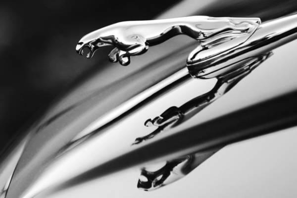 Photograph - Jaguar Car Hood Ornament Black And White by Jill Reger