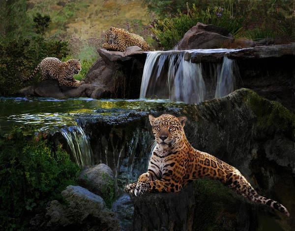 Photograph - Jaguar Falls by Melinda Hughes-Berland