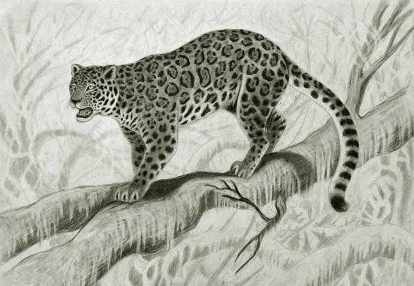 Carnivorous Drawing - Jaguar In The Forest by Nicola Fusco