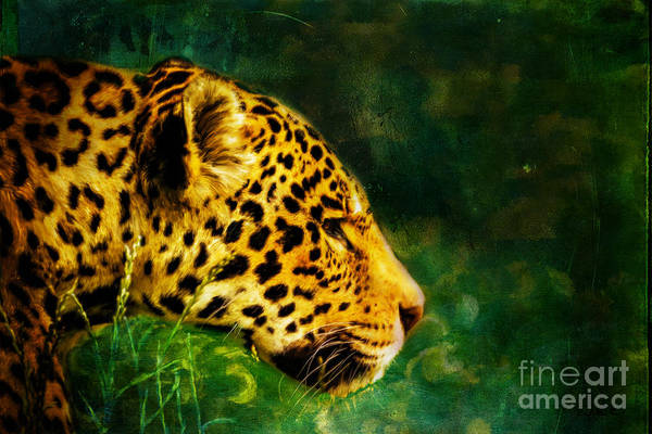 Digital Art - Jaguar In The Grass by Tracey Everington