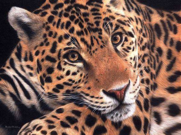 Jaguar Painting - Jaguar Painting by Rachel Stribbling