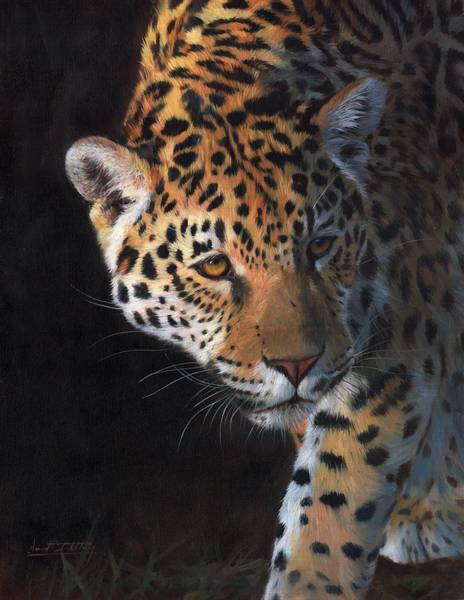 Jaguar Painting - Jaguar Portrait by David Stribbling