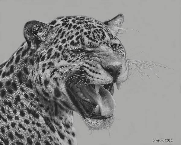 Digital Art - Jaguar Portrait by Larry Linton