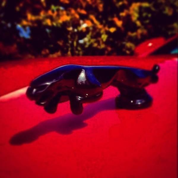 Jaguar Photograph - Jaguar The Wild by Azur Group