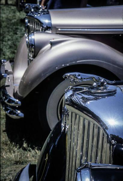 Photograph - Jaguars by Samuel M Purvis III