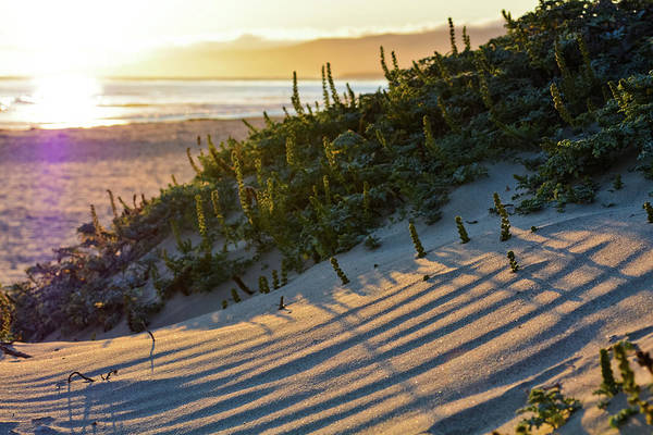 Photograph - Jalama Beach Sand Dunes by Kyle Hanson