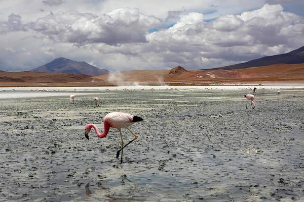 Photograph - James's Flamingo by Aidan Moran