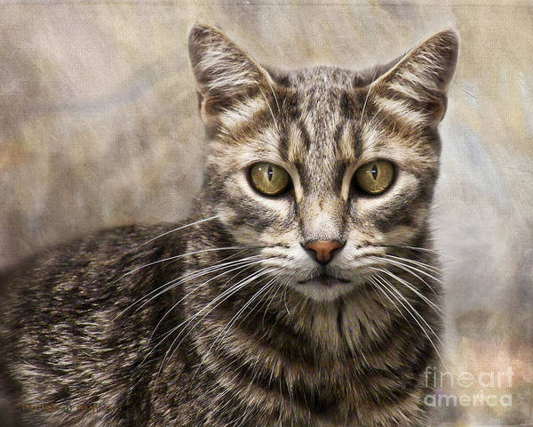 Digital Art - Janie's Kitty by Rhonda Strickland