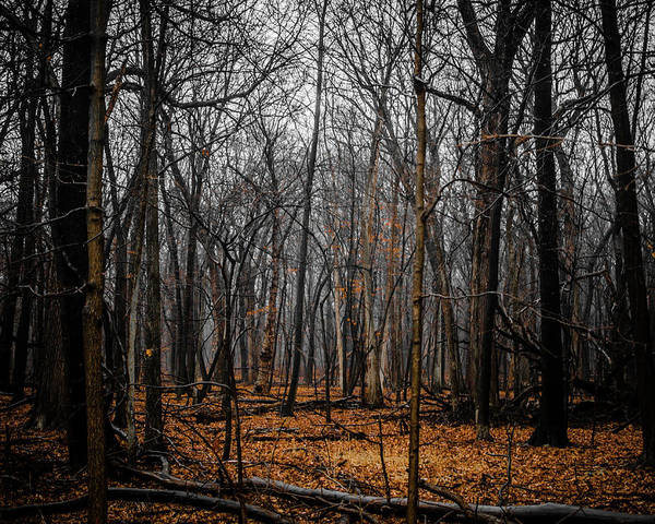 Photograph - January Forest Rains by Miguel Winterpacht