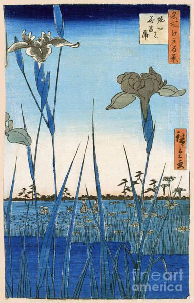 Photograph - Japan: Iris Garden, 1857 by Granger