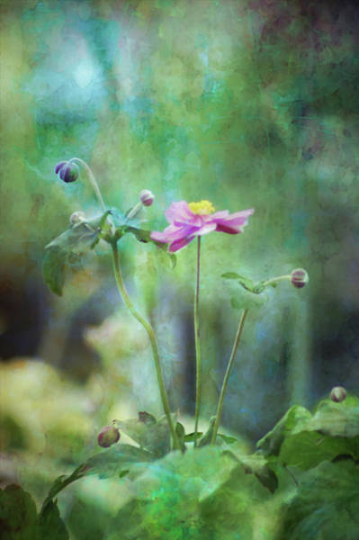 Photograph - Japanese Anemone 3943 Dp_2 by Steven Ward