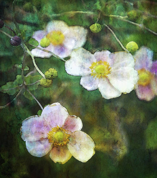 Photograph - Japanese Anemone 4781 Idp_2 by Steven Ward