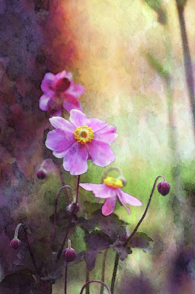 Photograph - Japanese Anemone Digital Watercolor 3948 W_2 by Steven Ward