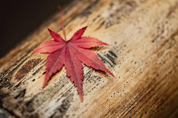 Photograph - Japanese Autumn by U Schade