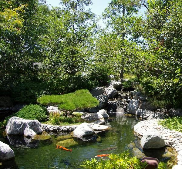 Photograph - Koi Pond 1 Japanese Friendship Garden by Phyllis Spoor