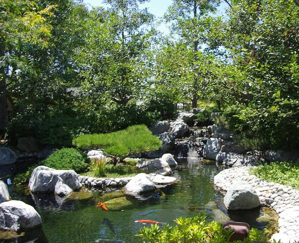 Photograph - Koi Pond 3 Japanese Friendship Garden by Phyllis Spoor