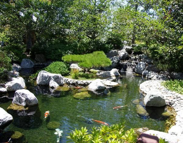 Photograph - Koi Pond 5 Japanese Friendship Garden by Phyllis Spoor