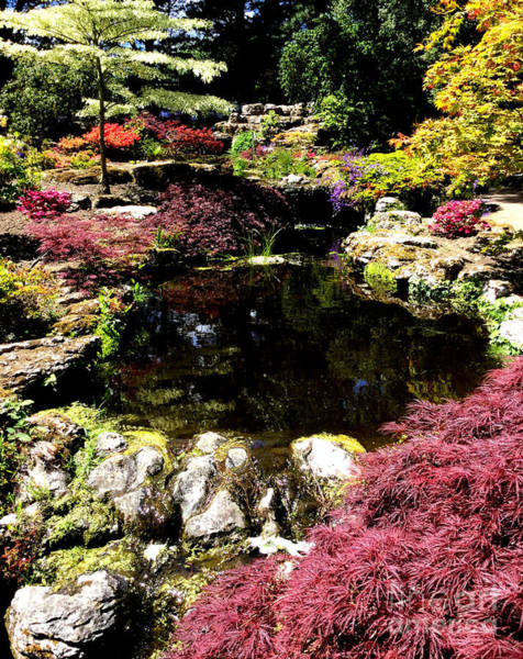 Photograph - Japanese Garden by Barefoot Bodeez Art