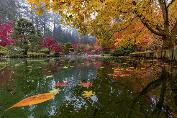 Photograph - Japanese Garden Kiri Pond Pov by Mark Kiver