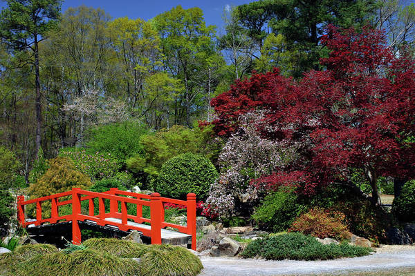 Photograph - Japanese Garden by Ronnie and Frances Howard