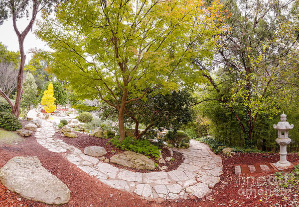 Photograph - Japanese Garden Serenity At Zilker Botanical Gardens - Austin Texas Hill Country by Silvio Ligutti