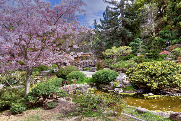 Photograph - Japanese Garden by Susan Rissi Tregoning
