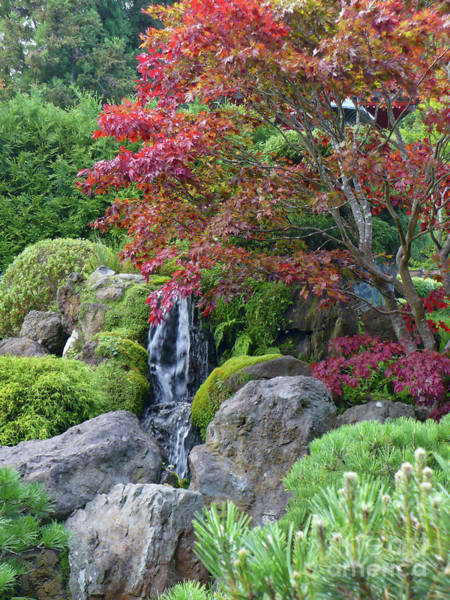 Photograph - Japanese Garden Waterfall With Fall Foliage  by Carol Groenen