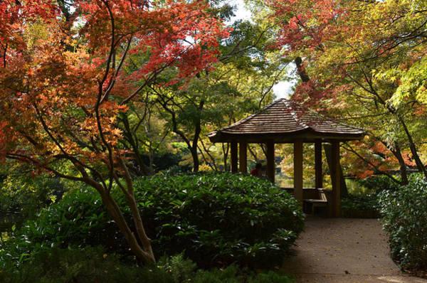 Photograph - Japanese Gardens 2577 by Ricardo J Ruiz de Porras