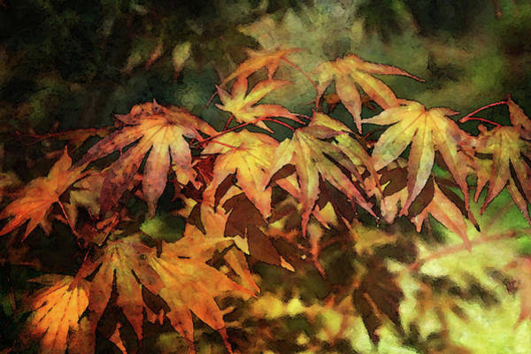 Photograph - Japanese Maple Digital Painting 2305 Dp_2 by Steven Ward